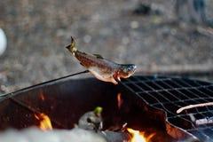 Peixes de acampamento grelhados da truta da grade dos peixes fotografia de stock