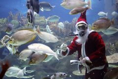 Peixes de alimentação de Papai Noel Fotografia de Stock