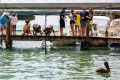 Peixes de alimentação dos povos no mar Fotos de Stock Royalty Free