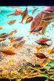 Peixes de alimentação Fotos de Stock Royalty Free