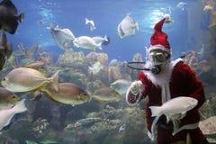 Peixes de alimentação de Papai Noel Fotos de Stock