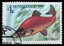 Peixes de alimento Imagens de Stock Royalty Free