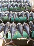 Peixes de atum em um mercado Imagens de Stock Royalty Free