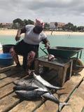 Peixes de atum na doca Fotos de Stock Royalty Free