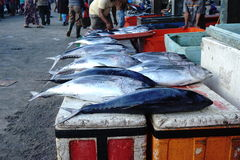 Peixes de atum no mercado Imagem de Stock