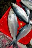 Peixes de Bangus para a venda no mercado público. Imagem de Stock