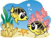 Peixes de borboleta Fotografia de Stock