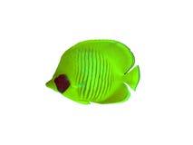Peixes de borboleta em um branco Imagem de Stock