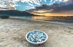 Peixes de bronze colhidos no alvorecer da manhã Foto de Stock Royalty Free