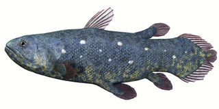 Peixes de Coelacanth sobre o branco Foto de Stock Royalty Free