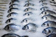 Peixes de Dorade na neve na loja imagens de stock royalty free