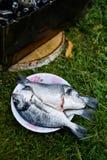 Peixes de Dorado em uma placa Fotografia de Stock Royalty Free