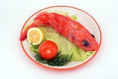 Peixes de escorpião Foto de Stock
