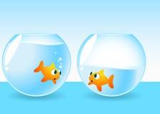 Peixes de Fishbowl que correm fora da água Fotografia de Stock