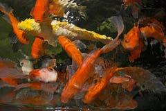 Peixes de Koi imagens de stock royalty free