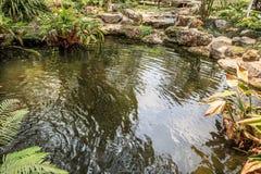 Peixes de Koi no projeto decorativo da paisagem da lagoa Foto de Stock