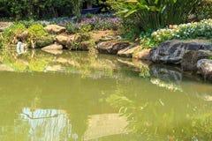 Peixes de Koi no projeto decorativo da paisagem da lagoa Imagens de Stock