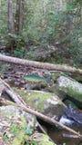 Peixes de madeira para representar a natureza Foto de Stock
