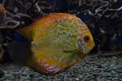 Peixes de mar Fotos de Stock Royalty Free