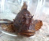Peixes de mar Foto de Stock Royalty Free