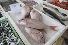 Peixes de mar exóticos Imagens de Stock