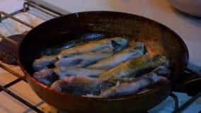 Peixes de mar fritados bandeja vídeos de arquivo