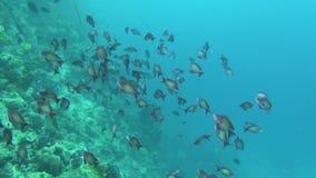 Peixes de mar Opinião do mar Vídeo subaquático Água Mergulho debaixo d'água filme