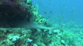 Peixes de mar Opinião do mar Vídeo subaquático Água Mergulho debaixo d'água vídeos de arquivo