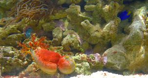 Peixes de mar profundo coloridos pequenos no aquário filme