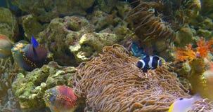 Peixes de mar profundo coloridos pequenos no aquário vídeos de arquivo