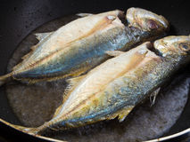 Peixes de mar que fritam em uma bandeja Fotos de Stock Royalty Free