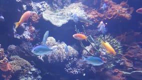 Peixes de néon Fotos de Stock Royalty Free
