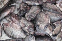 Peixes de Nile Tilapia Fotografia de Stock