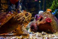 Peixes de pedra Imagens de Stock