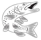 Peixes de Pike ilustração stock