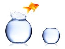 Peixes de salto imagem de stock