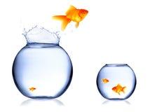Peixes de salto foto de stock