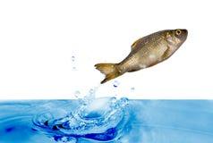 Peixes de salto imagens de stock royalty free