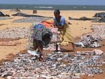 Peixes de secagem Fotografia de Stock