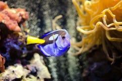 Peixes de sorriso Fotografia de Stock