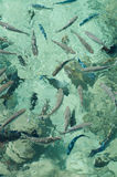 Peixes de Tahiti! Fotografia de Stock Royalty Free