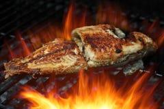 Peixes de Talapia imagem de stock