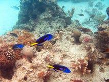 Peixes de Zanzibar fotografia de stock