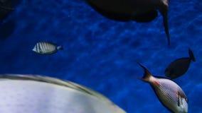 Peixes diferentes no fundo azul cáustico vídeos de arquivo