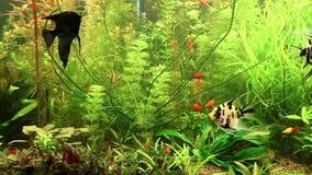 Peixes do aquário vídeos de arquivo
