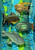 Peixes do Aquarian Fotos de Stock Royalty Free