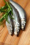 Peixes do arenque pequeno Fotografia de Stock Royalty Free