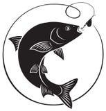 Peixes do caboz Imagens de Stock