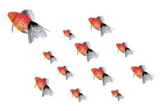 Peixes do campeão Imagem de Stock