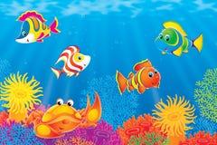 Peixes do caranguejo e do coral Imagens de Stock Royalty Free
